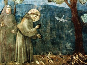 St Francis by Giotto